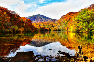 秋の赤沼 青森県八甲田山の写真素材 [FYI04839759]
