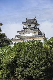 緑に囲まれた掛川城天守の写真素材 [FYI04840268]