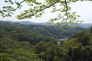 鎌倉の山の新緑の写真素材 [FYI04840449]