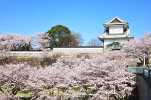 北陸金沢城 石川櫓と桜に快晴の空の写真素材 [FYI04840481]