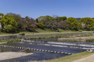 賀茂川と新緑の写真素材 [FYI04840816]