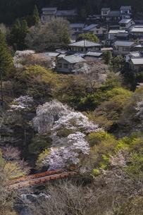 高雄の里と桜の写真素材 [FYI04840897]