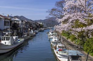 吉原漁港と桜の写真素材 [FYI04840906]