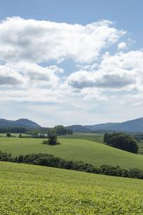 夏の緑の丘陵畑作地帯の写真素材 [FYI04841333]