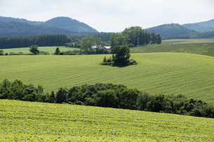 夏の緑の丘陵畑作地帯の写真素材 [FYI04841334]