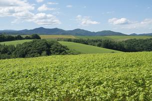 夏の緑の丘陵畑作地帯の写真素材 [FYI04841335]