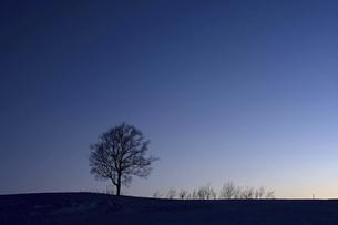 夕暮の空と大きな木のシルエットの写真素材 [FYI04841346]