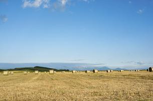 牧草ロールと夏空の写真素材 [FYI04841354]