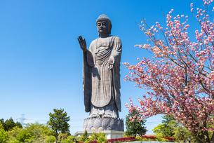 八重桜と牛久大仏の写真素材 [FYI04841455]