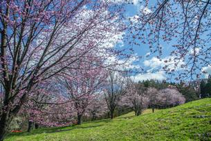 春の西蔵王の写真素材 [FYI04841730]