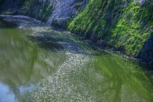 霞城公園お堀の写真素材 [FYI04841734]