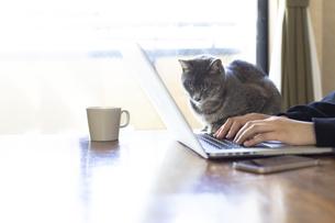 ノートパソコンで作業する女性の手元と猫の写真素材 [FYI04842008]