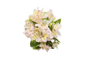 アルストロメリアの花束 の写真素材 [FYI04842137]