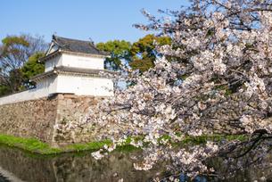 府内城址の桜の写真素材 [FYI04842196]