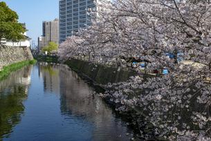 府内城址の桜の写真素材 [FYI04842253]