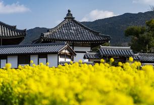菜の花咲く飛鳥寺の写真素材 [FYI04842376]