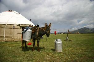 ミルク缶を置いたままどこかに行ってしまった飼い主の後ろ姿を見つめるロバの写真素材 [FYI04842678]