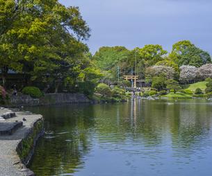 熊本県 風景 水前寺成趣園の写真素材 [FYI04842866]