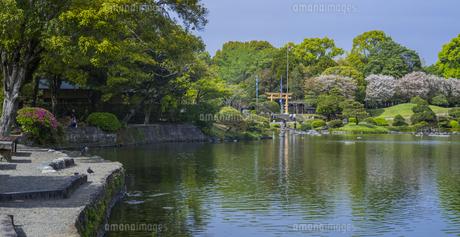 熊本県 風景 水前寺成趣園の写真素材 [FYI04842867]