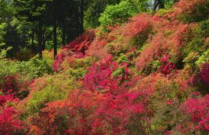 東秩父村 二本木峠 山つつじ咲く季節の写真素材 [FYI04842931]