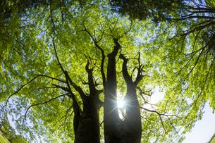 新緑の木と光の写真素材 [FYI04843256]
