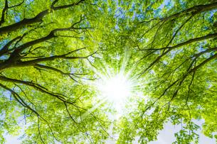新緑の木と光の写真素材 [FYI04843257]