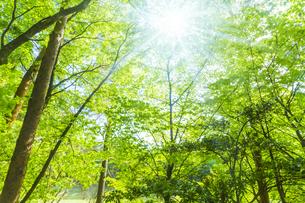 新緑の木と光の写真素材 [FYI04843260]