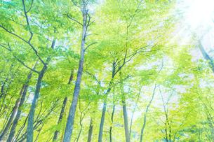 新緑の木と光の写真素材 [FYI04843261]
