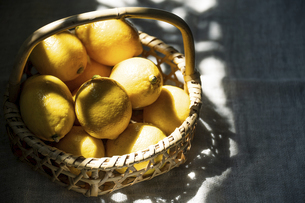 Ripe lemons in basket at sunlight.の写真素材 [FYI04843263]