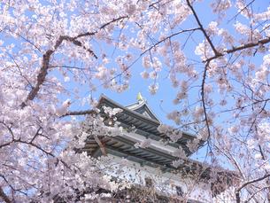 松前の桜の写真素材 [FYI04843310]