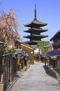 八坂の塔と桜 京都の写真素材 [FYI04843565]
