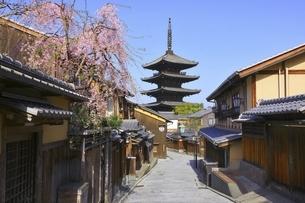 八坂の塔と桜 京都の写真素材 [FYI04843567]