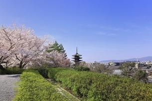 八坂の塔と桜に京都市街の写真素材 [FYI04843590]