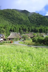 ソバの花咲く美山かやぶきの里 の写真素材 [FYI04843591]