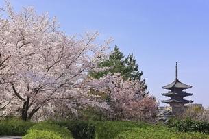 八坂の塔と桜 京都の写真素材 [FYI04843592]