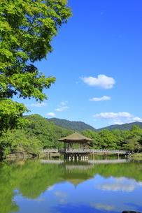 浮見堂と鷺池の写真素材 [FYI04843603]