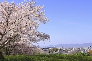 サクラと京都市街の写真素材 [FYI04843611]
