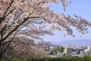 サクラと京都市街の写真素材 [FYI04843617]