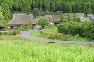 ソバの花咲く美山かやぶきの里の写真素材 [FYI04843651]