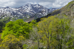 樽口峠から残雪と新緑の写真素材 [FYI04843763]