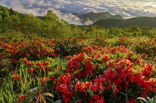 レンゲツツジ咲く美ヶ原高原の朝の写真素材 [FYI04843781]