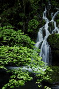 元滝と新緑のモミジの寸景の写真素材 [FYI04843788]