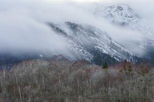 野伏ヶ岳の滝雲と樹林帯の写真素材 [FYI04843847]