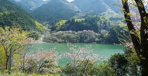 熊本県 風景 市房ダムの写真素材 [FYI04843872]