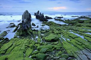 1月 【地学教材】 緑の根本海岸 -南房総市-の写真素材 [FYI04844159]