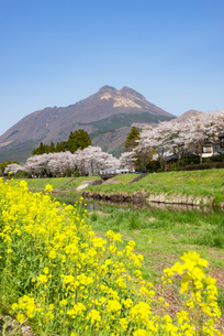 菜の花と由布岳の写真素材 [FYI04844176]