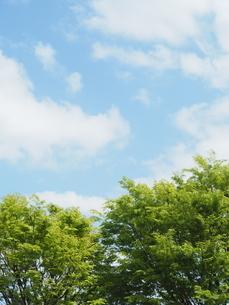 新緑の写真素材 [FYI04844241]