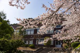 満開の桜と旧花輪小学校の写真素材 [FYI04844426]