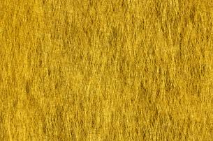 金紙素材の写真素材 [FYI04844495]