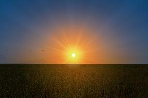 草原と朝日の写真素材 [FYI04844505]